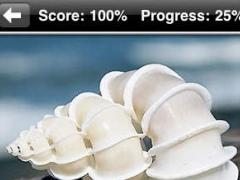 Shells 1.0 Screenshot
