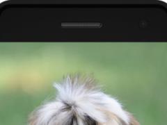 Shih Tzu 1.0 Screenshot