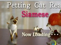 Siamese Petting cat 3D REAL 2.3 Screenshot