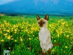 Siamese Petting cat 3D REAL Lite 3.0 Screenshot