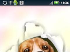 Silly Dog Live Wallpaper 1.0 Screenshot