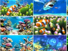 Sim Aquarium 3.8.68 Screenshot