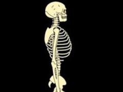 Skeleton Live Wallpaper 1.0 Screenshot