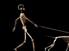 Skeleton Wallpapers 5.0 Screenshot