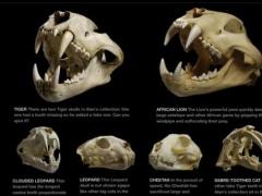 Skulls by Simon Winchester 1.0.3 Screenshot