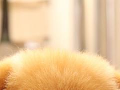 Sleeping Puppy Wallpapers 1.0 Screenshot