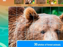 Smart Cubes - forest, animals of the forest 2.0 Screenshot