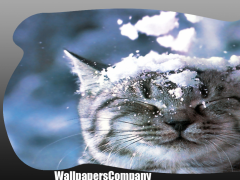 Snow Cat Wallpaper 2.5 Screenshot