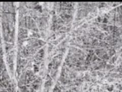 Snow Fall Live Wallpaper 1.3 Screenshot