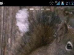 Snow Squirrel Live Wallpaper 0100 Screenshot