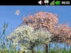 Spring Flowers Free Wallpaper 2.8 Screenshot