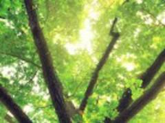 Spring Forest ★ Live Paper 02 1.0 Screenshot