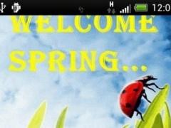 Spring Ladybug Live Wallpaper 26 Screenshot