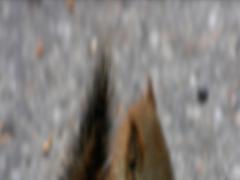 Squirrel Wallpaper HD Complete 1.0 Screenshot