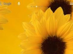 Sunflower lwp 2.1 Screenshot
