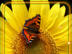 Sunflower Music live wallpaper 1.3 Screenshot
