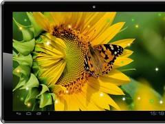 Sunflowers Free Live Wallpaper 2.1 Screenshot