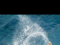 Surfing Magazine 4.5 Screenshot