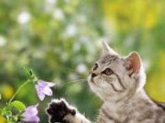 Sweet Cats Wallpapers 7.5 Screenshot