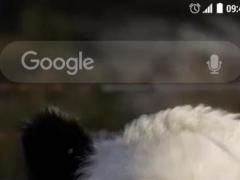 Talking Pandas 3D Live WP 2.0 Screenshot