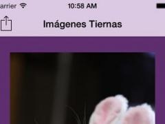 Tender Stock 1.0 Screenshot