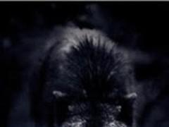 Terrible Wolf Live Wallpaper 1.0 Screenshot