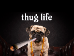Thug Life Photo Editor Mafia 4.0 Screenshot