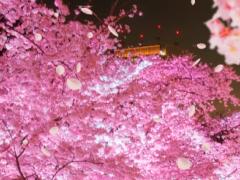 【Tokyo Midtown and Sakura】 1.0.0 Screenshot