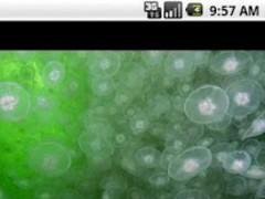 Under the Sea Free 1.0.5 Screenshot