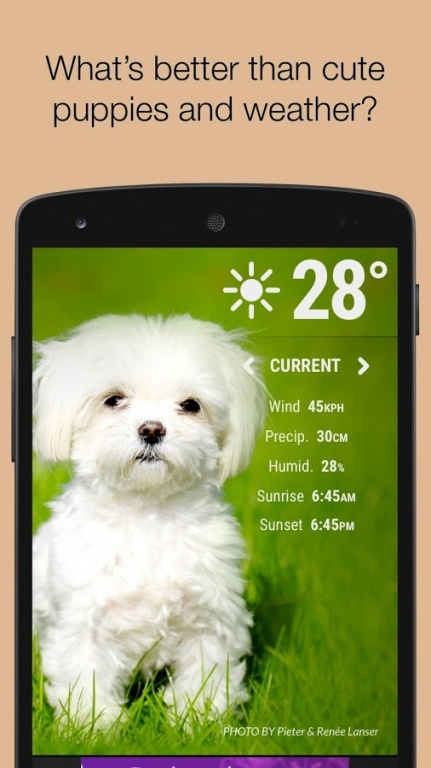 Weather Puppies 1 0 Free Download