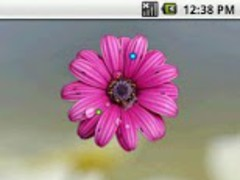 Wet Daisy Analog Clock 2x2 1.0 Screenshot