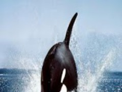 whales 4.1 Screenshot
