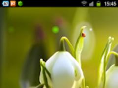 White Flowers HD Wallpaper 1.0.1 Screenshot