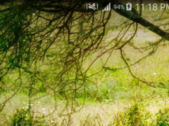 Wild Animal Live Wallpaper PRO 1.0.1 Screenshot