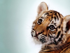 Wild Animals Cub Wallpapers 1.0 Screenshot