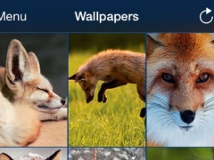 Wild animals wallpaper 1.0 Screenshot