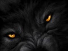 Wild Wolf Live Wallpaper 1.4 Screenshot