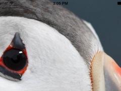Wildlife Spotting 1.2 Screenshot