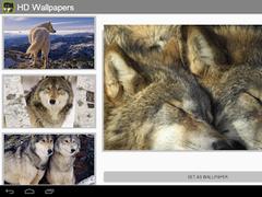 Wolves HD wallpapers 2.1 Screenshot