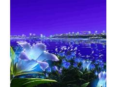 Wonderful Sea Live Wallpaper 1.0 Screenshot