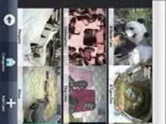 World Cams (SALE! HALF PRICE!) 2.4 Screenshot