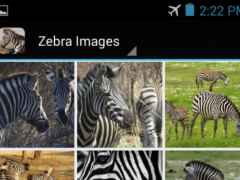 ZebraBG: The Zebra Wallpapers 1.1.1 Screenshot